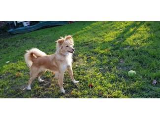 Honden en Puppy's ik zoek een volwassen/klein/Hondje/die herplaats moet worden