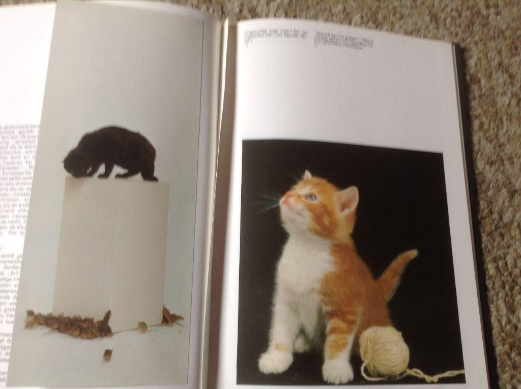 Een Boek van katten ,lieve schattige huisdieren en aangenaam