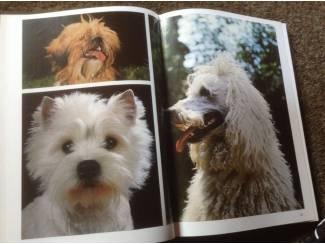 Honden en Puppy's Boek van honden ,lieve en schattige huisdieren ,mensenvriend