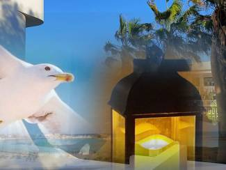 Fuerteventura 2 persoons Kust apt Ocean Breeze