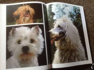 Een Boek van honden ,lieve huisdieren aangename