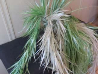 Decoratie Groene en Witte Grassen 2 lengtes