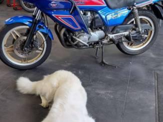 Motoren | Honda Honda CB900