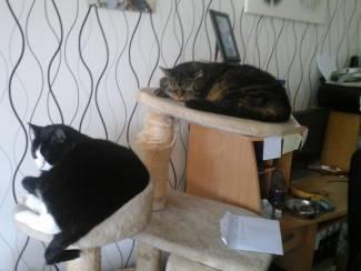 Gezocht: Gratis katten opvang