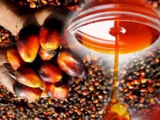 palmolie om te koken, biodiesel en ander gebruik