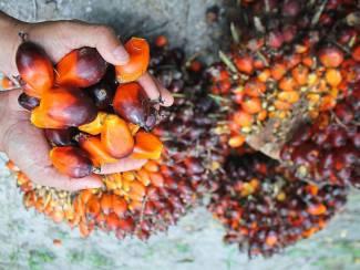 palmolie, zonnebloemolie en afgewerkte bakolie