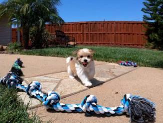 Teddy Bear Pups Te Kopps Norm