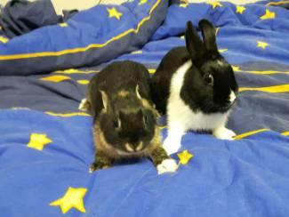 2 lieve konijntjes (broertje en zusje)